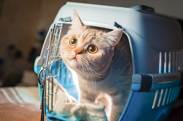 help your cat get used to its cat carrier