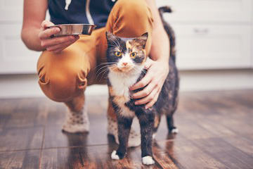 improve your cat feeding on departure day by adjusting the cat feeding schedule