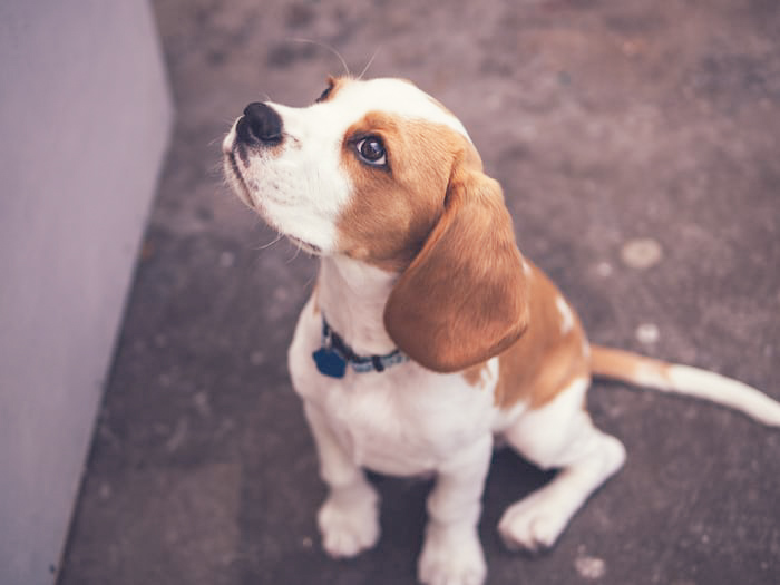 training good behavior in your dog with treats ahead of the roadtrip